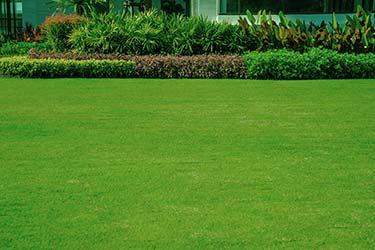Large freshly mowed lawn