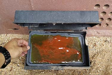 Glue box trap installation at property during pest control extermination job