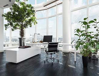 Bright, modern office with stylish plants and shrubs throughout