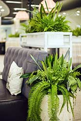 Lush ferns and pot plants decorate modern office