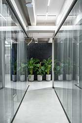Large plants in chic concrete pots displayed in sleek office hallway