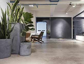 Fiddle leaf figs and sansevieria in large fashionable concrete pots in industrial office
